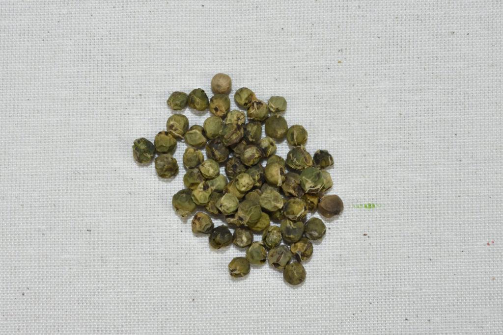 Der Extravagante: Grüner Pfeffer | Getrockneter grüner Pfeffer in ganzen Körnern.