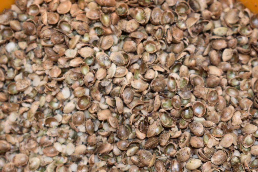 Hanf-Apfelkuchen: So wird's gemacht (1/5) | Hanfnüsse sind die Samen der Hanfpflanze. Da die Schale relativ hart ist, solltest Du sie unbedingt im Mörser oder mit einem Häcksler grob zerstoßen. Das intensiviert auch ihr Aroma.
