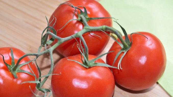 Strauchtomaten gehören zu den Lieblings-Tomaten der Deutschen - sie überzeugen durch festes Fruchtfleisch, ein intensives Aroma und gute Haltbarkeit.
