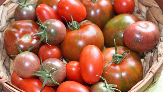Gibt's nicht nur in rot - Tomaten bieten eine unglaubliche Vielfalt in Form, Farbe und Geschmack!