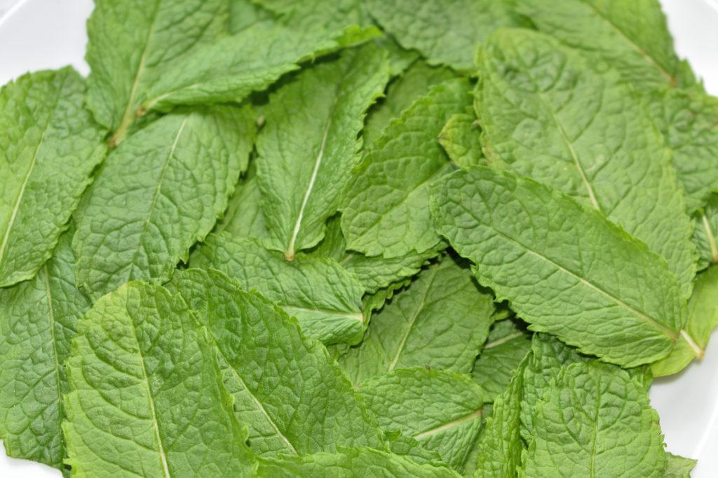 Vorbereitung ist alles - Pfefferminz | Am besten zupfst Du die Blätter erst vor der Zubereitung ab und wäscht sie kurz unter fließend kaltem Wasser ab; so bleibt ihr frisches Aroma erhalten.
